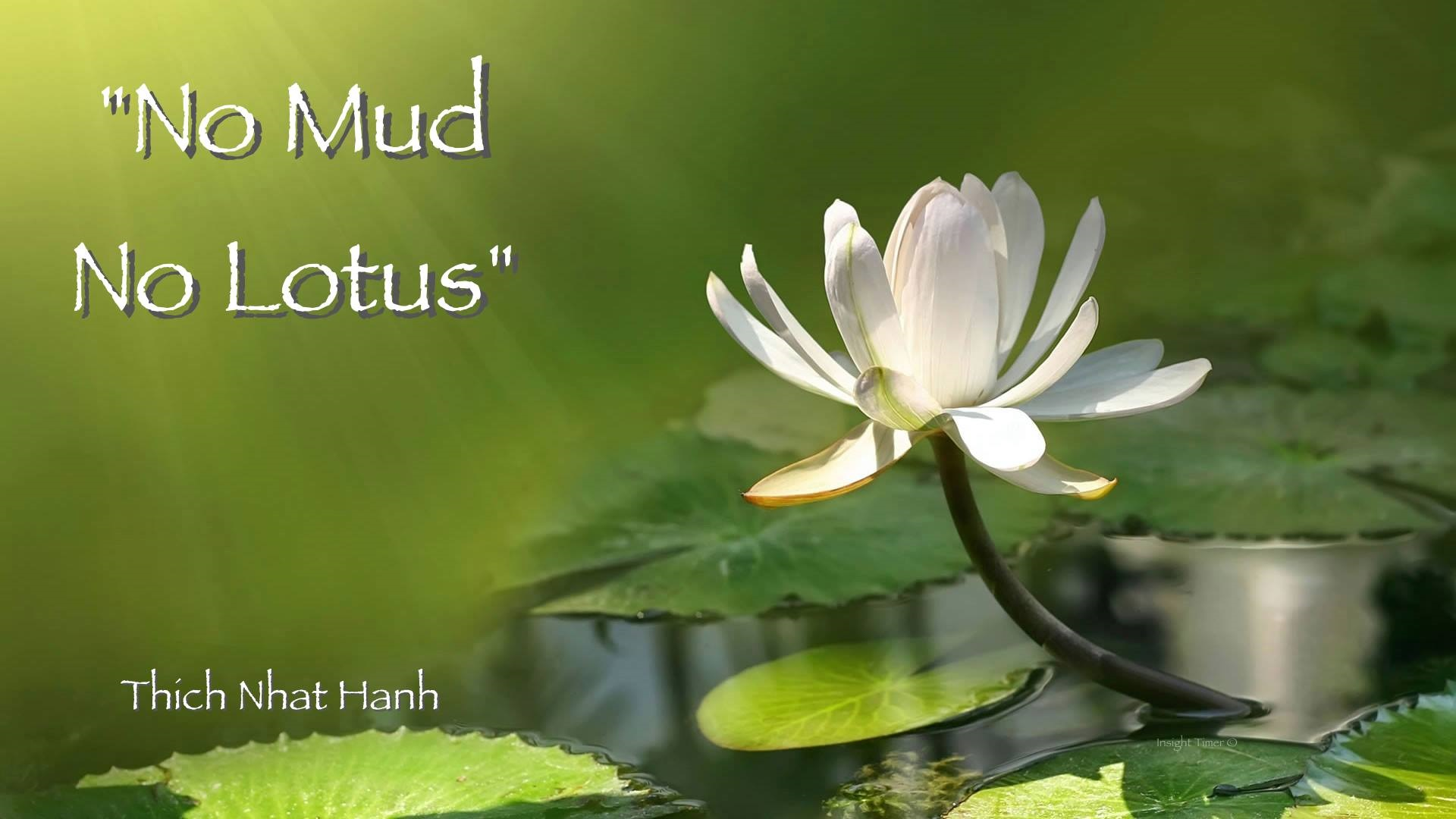 4website - no-mud- no-lotus