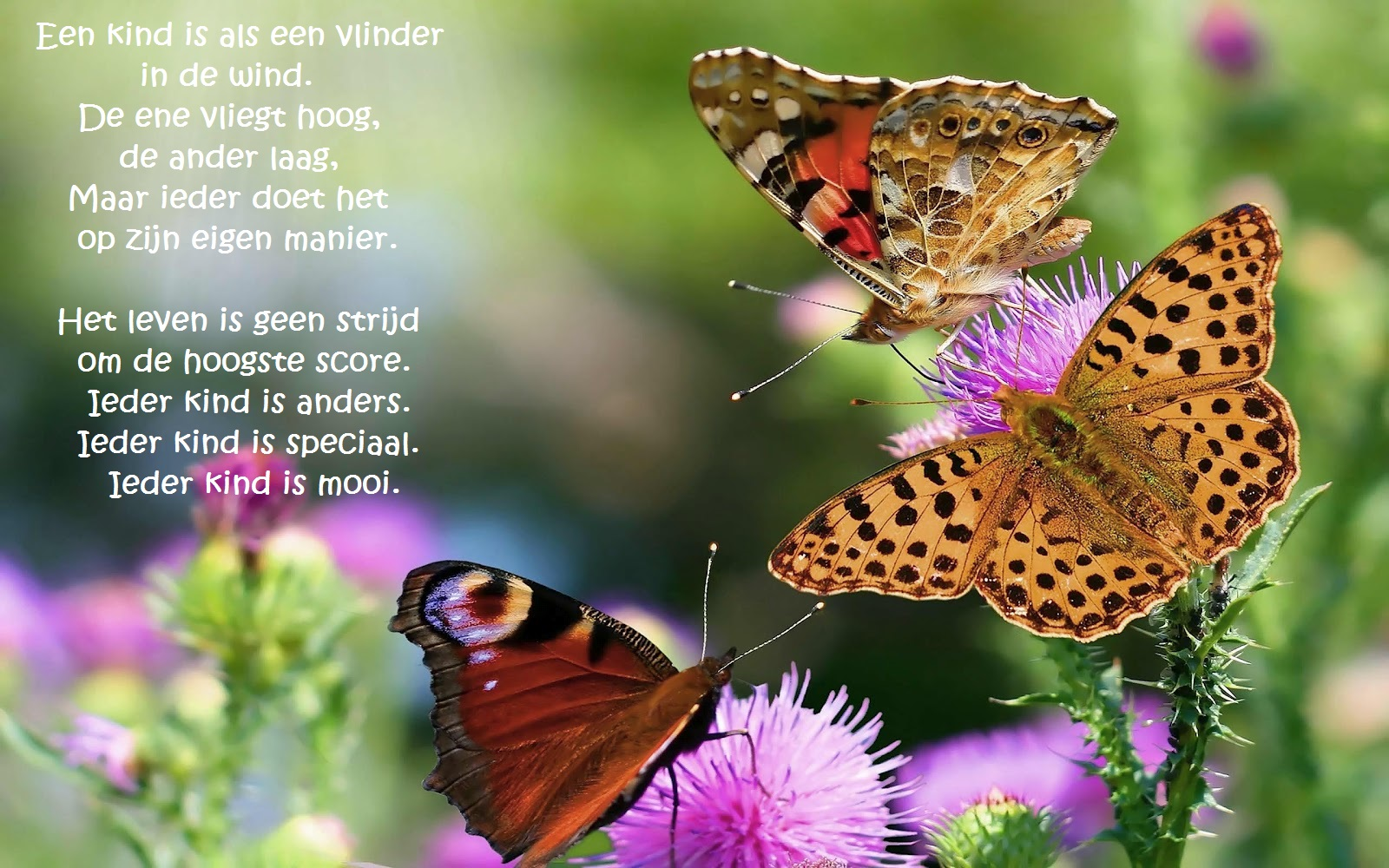 4website - vlinders - opgroeiend kind - Nederlands