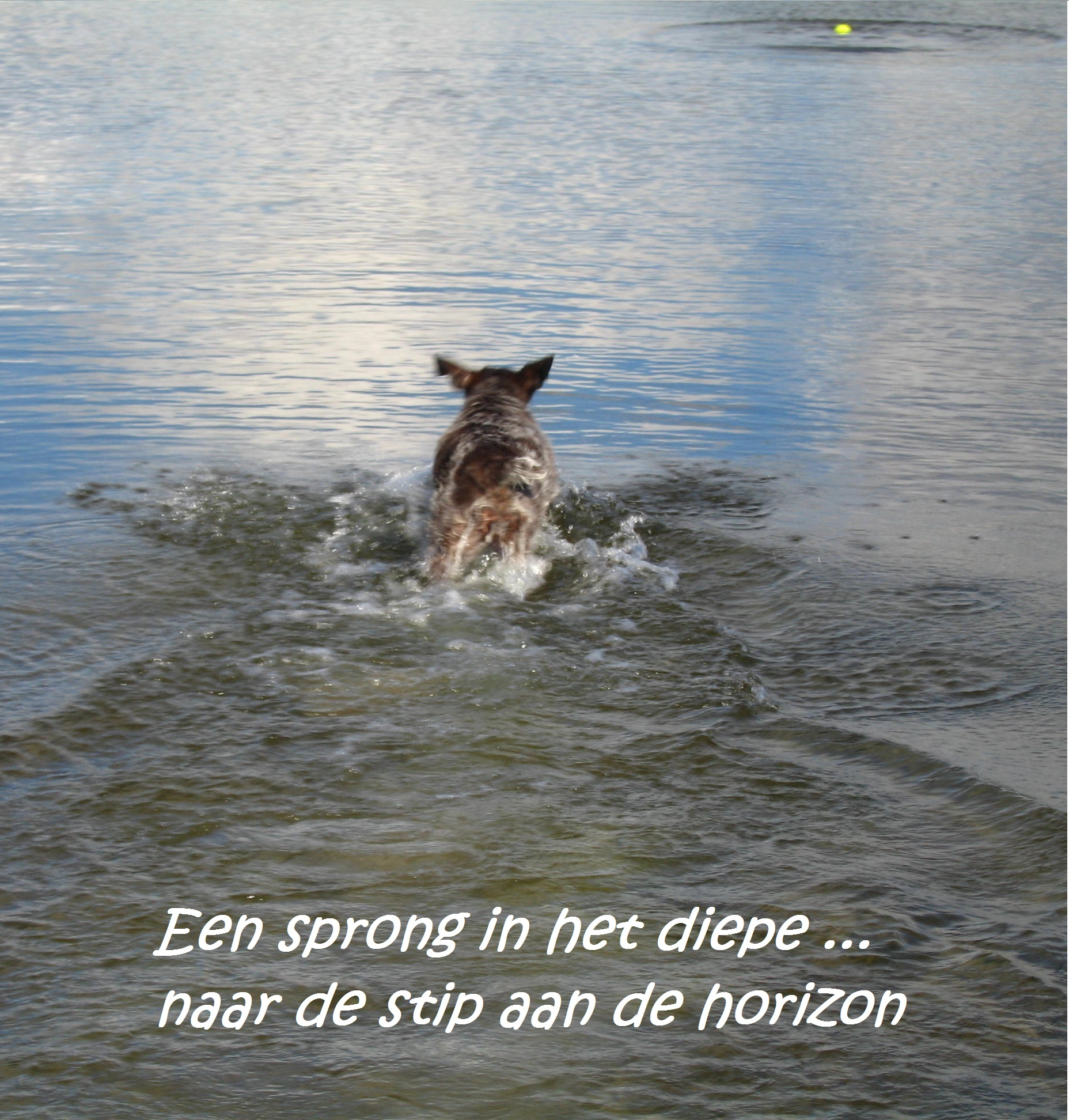 4website - stip aan de horizon
